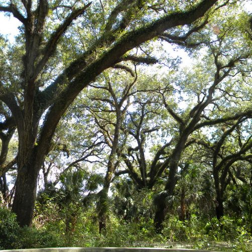 Long Key Nature Center / Vista View Park – Book The Best Wedding Venue