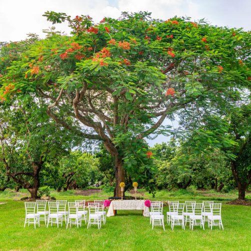 Mon Petit Gardens – Book The Best Wedding Venue